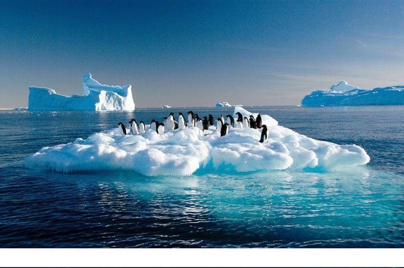 Penguins Antarctica.jpg