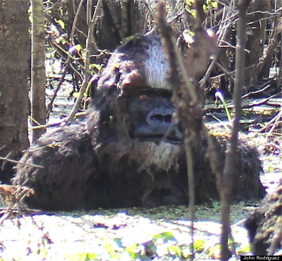 Bigfoot TAMPA SKUNK APE