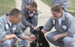 "Bad Seed Inmates working to train dogs in the ""Puppies for Parole"" program (Jefferson City, Missouri)"
