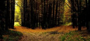 two-roads-in-a-yellow-wood