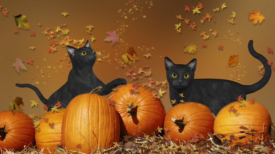 Awesome Black Cats Pumpkins